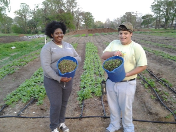 Amber and Christian show the morning harvest from the Tee Field