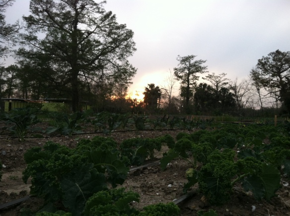 Come work in our beautiful fields - we appreciate your support of our work to grow food for New Orleans!