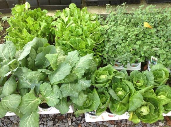Sneak Peek: Lush Lil Plant Starts for this Saturday's Plant Sale